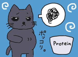 プロテインを飲んで腸内環境が乱れたクロにゃん